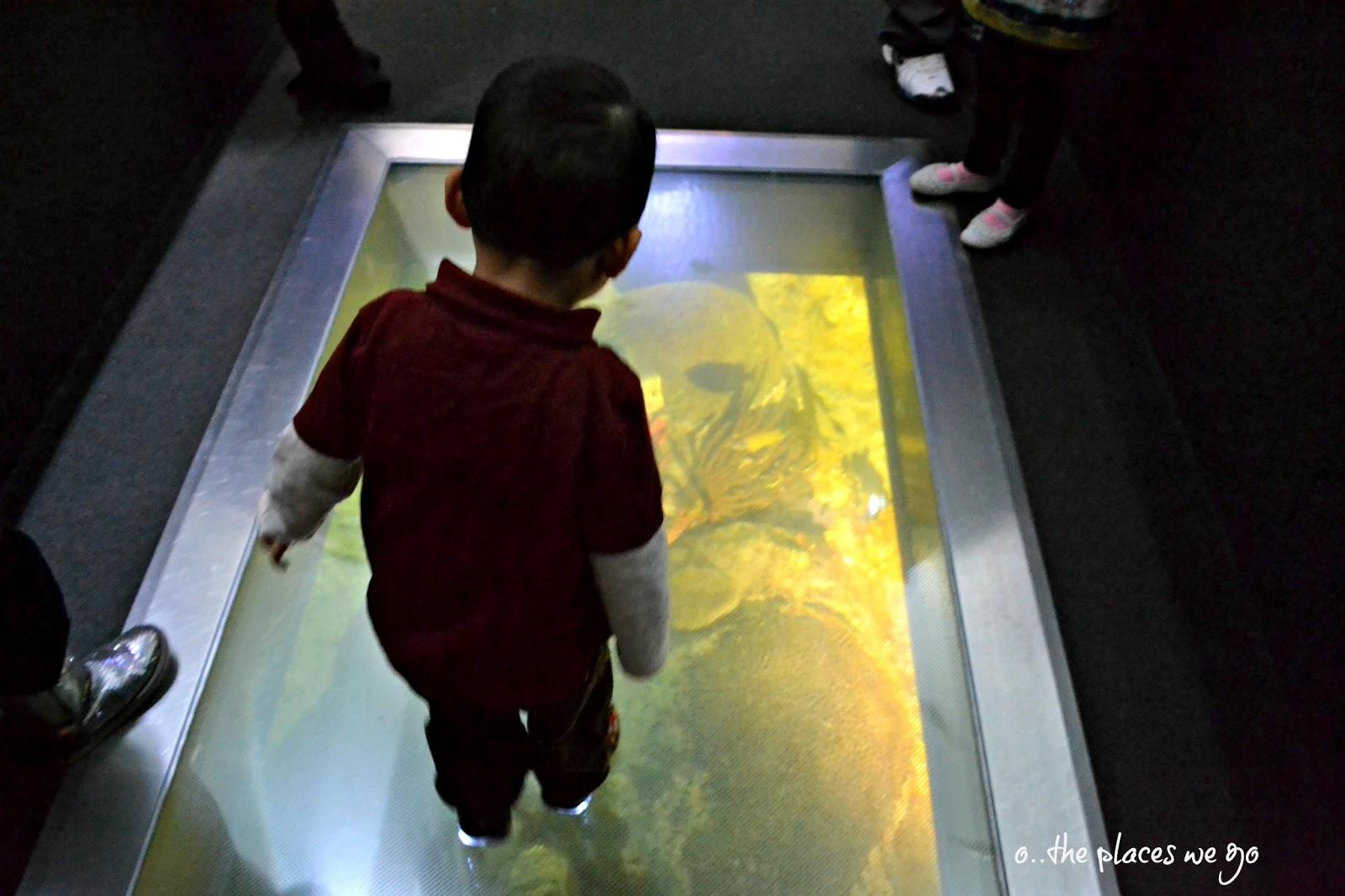 Denah Desain Lantai Kaca Kolam ikan » Gambar 333 Lantai Kaca dengan Kolam Ikan